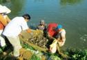 Quảng Nam: Nuôi cá rô đầu vuông kết hợp cá trê vàng