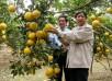 Bán Cây Giống Đặc Sản Bưởi Diễn,Bưởi Chậu, Bưởi lâu năm,Các loại cây ăn quả